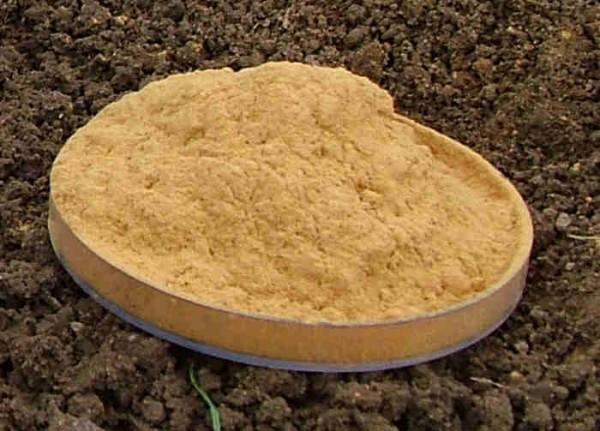 Faulbaumrinde - goldgelb gemahlen