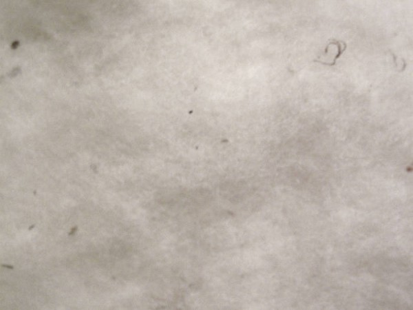 Merinowolle - weiß sehr fein im Vlies